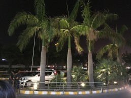 Palm Trees Outside Ambience Mall