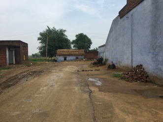 A rural road covered by dirt and mud, sidelined by a few cows chained to the building on the right.